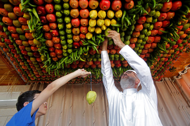 "Members of the Samaritan sect decorate with fruits and vegetables a traditional hut known as a ""sukkah"", which is a ritual hut used during the Jewish holiday of Sukkot, on Mount Gerizim on the outskirts of the West Bank city of Nablus, October 13, 2016. (Photo by Abed Omar Qusini/Reuters)"