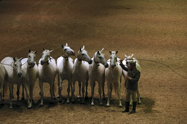 Purebred Spanish mares are led by a Spanish army trainer during the opening show of the Sicab International Pre Horse Fair which is dedicated in full and exclusively to the purebred Spanish horse in the Andalusian capital of Seville, southern Spain, November 17, 2015. (Photo by Marcelo del Pozo/Reuters)