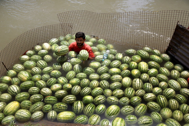 An Indian vendor cools himself and his watermelons at a canal as he waits for customers on a hot afternoon in Jammu, the winter capital of Kashmir, India, 28 May 2018. Watermelons are very popular in the summer months as they contain about 70-80 per cent of water, plenty of electrolyte minerals, natural sugars, and good amounts of vitamin C. Temperatures of around 44 degrees Celsius were forecast in the region. (Photo by Jaipal Singh/EPA/EFE)