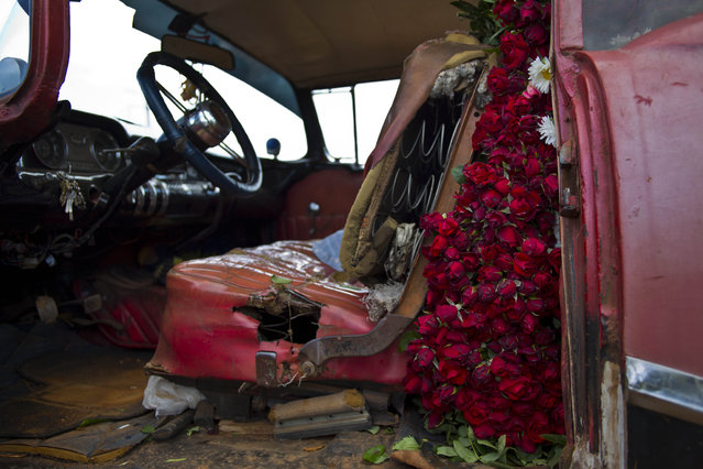 In this Thursday, January 29, 2015 photo, the backseat of a rented 1957 Buick is packed to the brim with flowers, to be transported to Havana from San Antonio de los Banos, Cuba. Every Monday and Thursday morning, self-employed flower vendor Yaima Gonzalez Matos leaves her home to visit a dozen farmers who sell her sunflowers, roses, lilies and other blooms. She loads the flowers into the rented American classic and delivers to customers in the capital. (Photo by Ramon Espinosa/AP Photo)