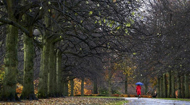 A woman walks her dog in the rain through Calderstones Park in Liverpool, northern England November 17, 2016. (Photo by Phil Noble/Reuters)