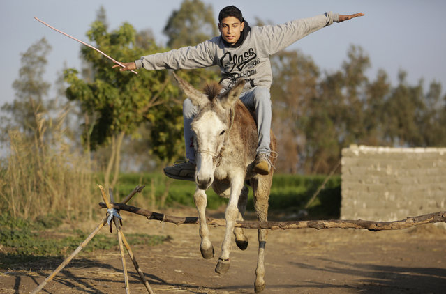 In this Friday, February 5, 2016 picture, Ahmed Ayman and his donkey jump over a barrier in the Nile Delta village of Al-Arid about 150 kilometers north of Cairo, Egypt. Donkeys are a fixture of daily life in rural Egypt, where they are used for transportation or to haul goods, and can often be seen in Cairo and other major cities. But it's rare to see a donkey gallop, much less go airborne. (Photo by Amr Nabil/AP Photo)
