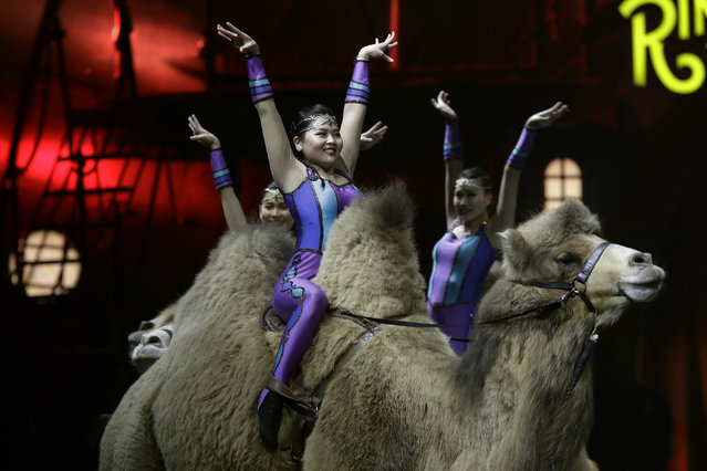 Ringling Bros. and Barnum & Bailey acrobats ride camels during a performance Saturday, January 14, 2017, in Orlando, Fla. (Photo by Chris O'Meara/AP Photo)