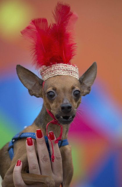 "A woman holds up her dog Nick during the ""Blocao"" dog carnival in Rio de Janeiro. (Photo by Silvia Izquierdo/AP Photo)"