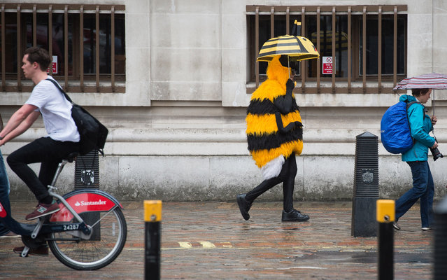 A woman in a bumble bee costume shelters from the rain beneath an umbrella as she walks through central London, on May 14, 2015. (Photo by Leon Neal/AFP Photo)