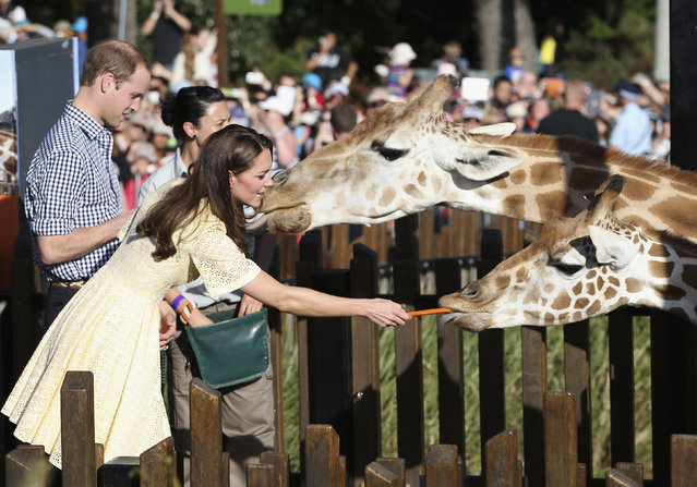 Prince William and Catherine, Duchess of Cambridge, feed giraffes at Sydney's Taronga Zoo April 20, 2014. The Prince and his wife Kate are undertaking a 19-day official visit to New Zealand and Australia with their son George. (Photo by Chris Jackson/Reuters)