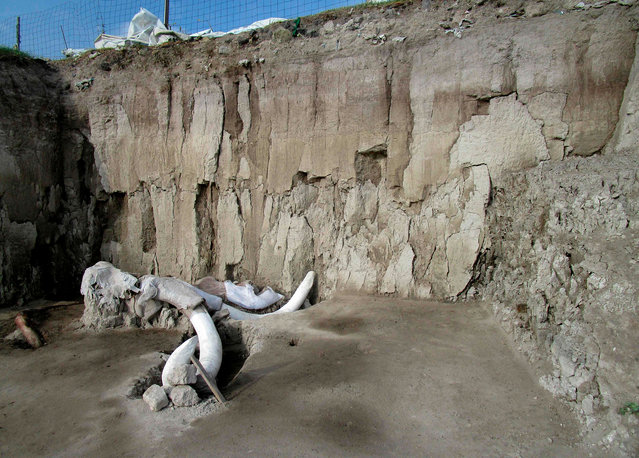 Handout photograph released on November 6, 2019 by Mexico's National Institute of Anthropology (INAH) shows mammoth bones in Tultepec, Mexico. The bones of at least 14 mammoths, who would have lived more than 14,000 years ago, were found in what is believed to be the first find of a mammoth trap set by humans. (Photo by National Institute of Anthropology/AFP Photo)