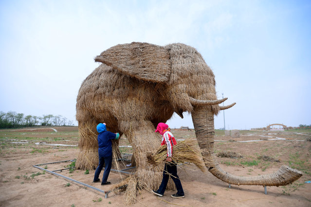 Farmers build a straw sculpture in the shape of an elephant in Hunnan district of Shenyang, Liaoning province, China May 31, 2017. (Photo by Reuters/China Daily)