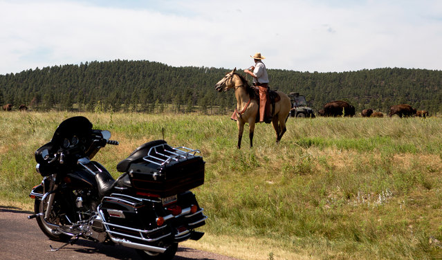 Custer State Park assistant buffalo herd manager Doug Cox monitored motorcycle traffic from horseback during the annual Sturgis Motorcycle Rally on August 3, 2015. (Photo by Kristina Barker/Reuters)
