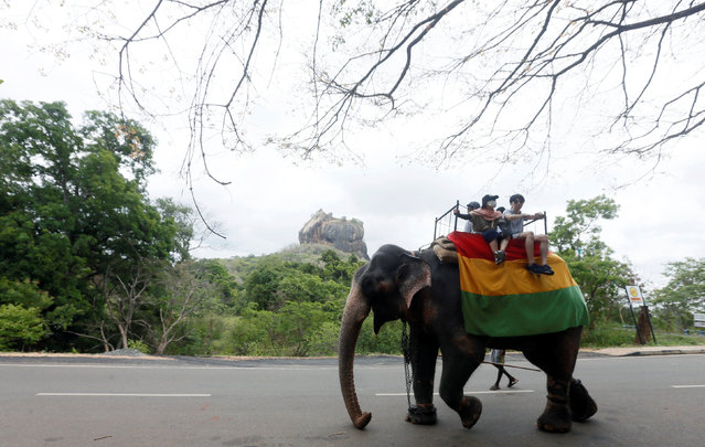 A group of tourists travel by elephant along a main road, as the Sigiriya rock fortress is seen in the background in Dambulla, Sri Lanka August 19, 2017. (Photo by Dinuka Liyanawatte/Reuters)