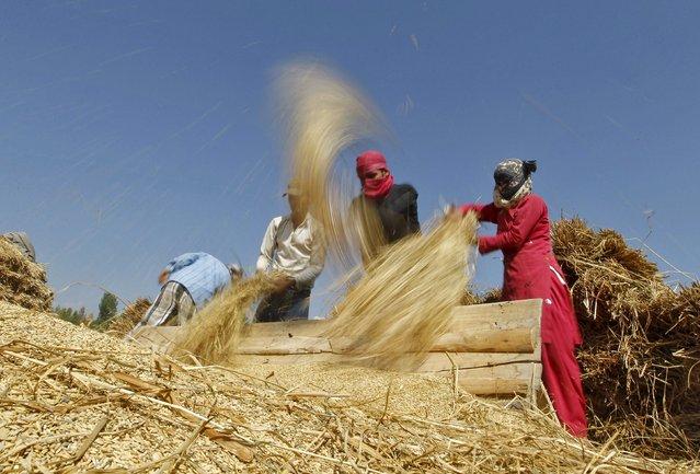 Kashmiri farmers thrash paddy crops on the outskirts of Srinagar September 14, 2015. (Photo by Danish Ismail/Reuters)