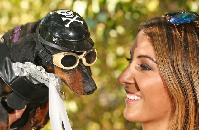 Hayley Swanson poses with her mini dachshund Chilli, dressed as a biker dog as she competes in the Hophaus Southgate Inaugural Best Dressed Dachshund competition on September 19, 2015 in Melbourne, Australia. (Photo by Scott Barbour/Getty Images)