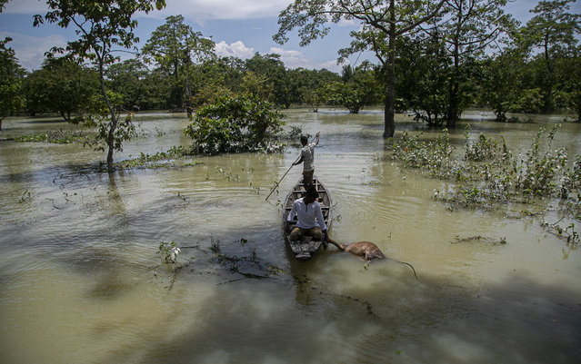 An Indian forest guard on a boat takes away the carcass of a wild buffalo calf through flood water at the Pobitora wildlife sanctuary in Pobitora, Morigaon district, Assam, India, Thursday, July 16, 2020. Floods and landslides triggered by heavy monsoon rains have killed dozens of people in this northeastern region. The floods also inundated most of Kaziranga National Park, home to an estimated 2,500 rare one-horned rhinos. (Photo by Anupam Nath/AP Photo)