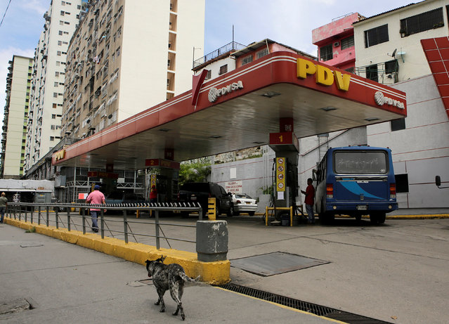 A dog walks past a gas station with the logo of the Venezuelan state oil company PDVSA in Caracas, Venezuela, September 14, 2016. (Photo by Henry Romero/Reuters)
