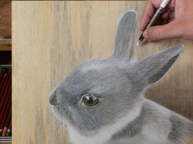 Ivan Hoos drawing of a rabbit. (Photo by Ivan Hoo/Caters News)