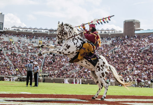 Florida State mascot Osceola riding the horse Renegade celebrates a touchdown in the second half of an NCAA college football game against Syracuse in Tallahassee, Fla., Saturday, October 31, 2015. Florida State defeated Syracuse 45-21. (Photo by Mark Wallheiser/AP Photo)