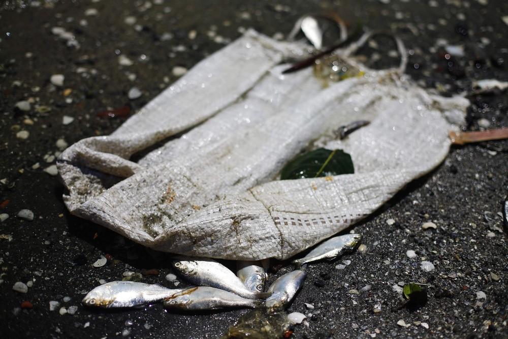 Dead Fish in Rio Olympic Bay