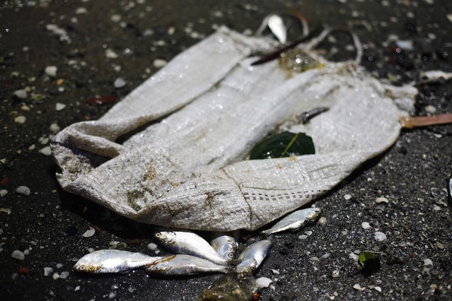 Dead fish are pictured on the banks of the Guanabara Bay in Rio de Janeiro February 24, 2015. (Photo by Ricardo Moraes/Reuters)