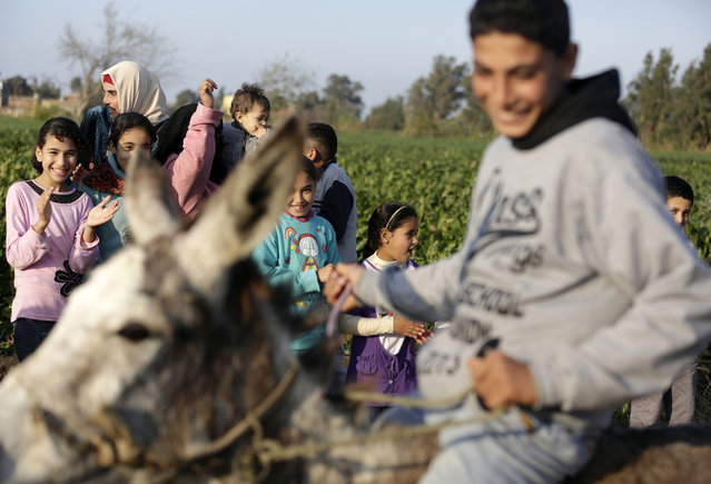 In this Friday, February 5, 2016 picture children applaud Ahmed Ayman and his donkey after they jumped over a barrier in the Nile Delta village of Al-Arid about 150 kilometers north of Cairo, Egypt. (Photo by Amr Nabil/AP Photo)