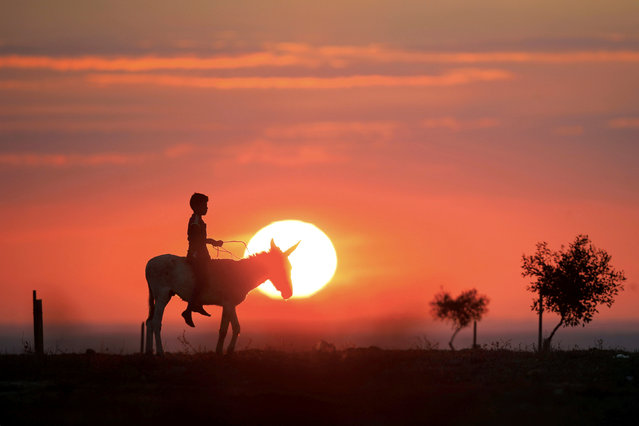 A Bedouin boy rides a donkey on a sunset, in a field near the southern city of Ofakim, Israel December 22, 2018. (Photo by Amir Cohen/Reuters)