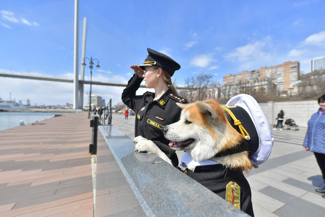 A girl walks an Akita-inu dog dressed in a military uniform in Vladivostok, Russia on April 9, 2019. (Photo by Yuri Smityuk/TASS)