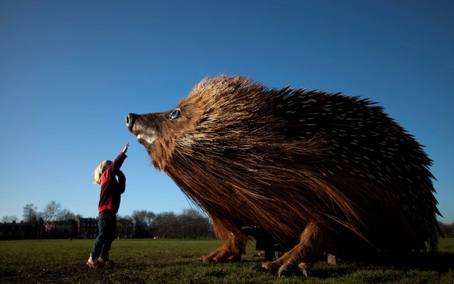 A child reaches up to a model of a hedgehog, measuring 12 feet long, 8 feet wide, and 7 feet tall, on Clapham Common in south London, on February 16, 2014, as it marks the launch of the second series of David Attenborough's Natural Curiosities on UKTV's Watch channel. (Photo by David Parry/PA Wire)