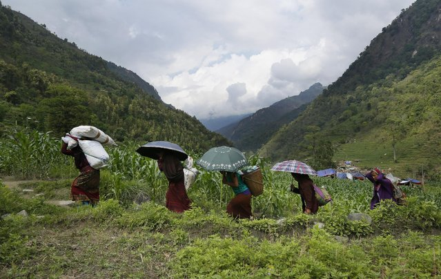 Female villagers start their 20km (12 mile) hike back up to their mountain home with international relief aid they received in the damaged village of Balua, near the epicenter of Saturday's massive earthquake, in the Gorkha District of Nepal, Thursday, April 30, 2015. (Photo by Wally Santana/AP Photo)