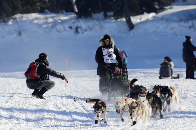 Dave Branholm's team swerves to avoid an onlooker while competing in the official restart of the Iditarod, a nearly 1,000 mile (1,610 km) sled dog race across the Alaskan wilderness, in Fairbanks, Alaska, U.S. March 6, 2017. (Photo by Nathaniel Wilder/Reuters)