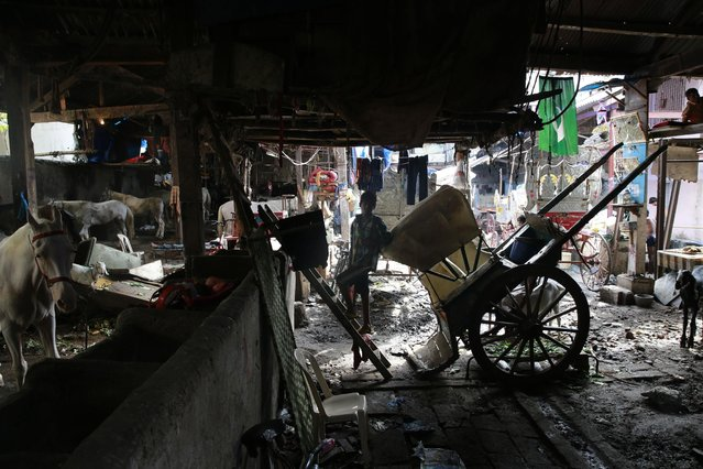 This June 16, 2015 photo, shows a general view of a stable in Mumbai, India. (Photo by Rafiq Maqbool/AP Photo)