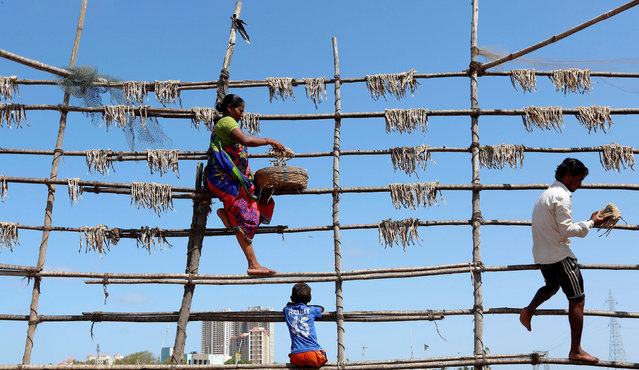 People hang fish to dry on bamboo poles in Mumbai, India May 24, 2016. (Photo by Shailesh Andrade/Reuters)