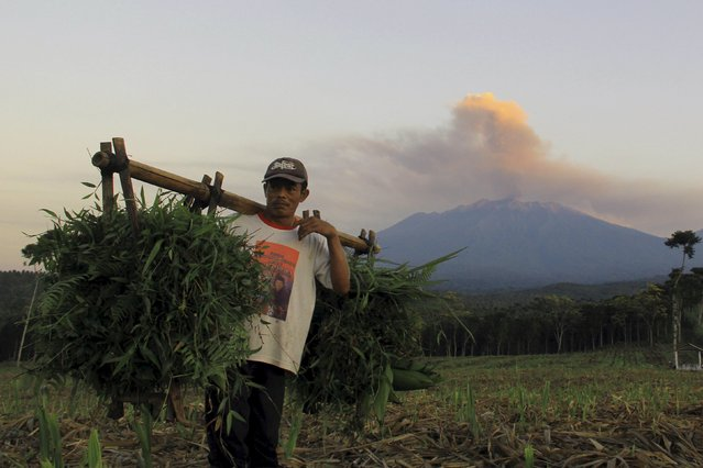 A farmer walks in a field as ash and smoke are emitted from Mt. Raung volcano in the background during a small eruption as seen from the village of Sempol, Banyuwangi, in East Java, Indonesia July 23, 2015, in this photo taken by Antara Foto. (Photo by Budi Candra Setya/Reuters/Antara Foto)