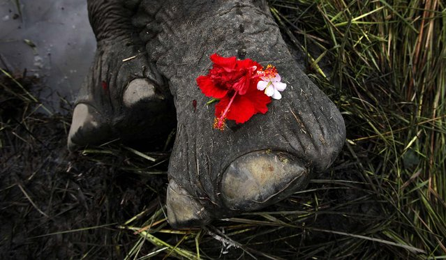 A female adult elephant lies dead on a paddy field, covered with flowers offered by villagers, in Panbari village, India, on September 1, 2012. The elephant, which was crossing a railway line with a herd of wild Asiatic elephants, was killed after being hit by a speeding train. (Photo by Anupam Nath/Associated Press)