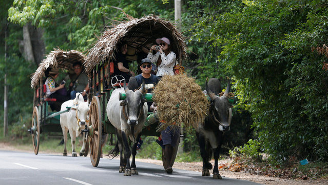 A group of tourists travel on a traditional bullock cart along a main road in Dambulla, Sri Lanka August 19, 2017. (Photo by Dinuka Liyanawatte/Reuters)