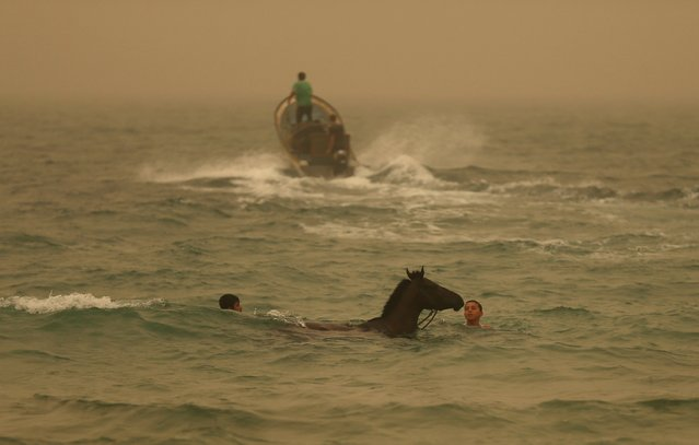 A Palestinian boy washes a horse in the Mediterranean Sea during a sandstorm in the northern Gaza Strip September 8, 2015. (Photo by Mohammed Salem/Reuters)
