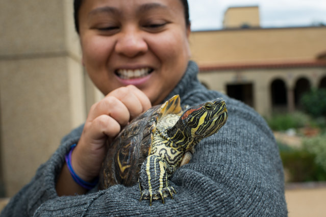 Athena Fulay, 36, of DC, holds her pet, Kaipua, a red ear slider turtle, during the blessing.  Blessing of the Animals was held at Franciscan Monastery of the Holy Land in Washington, D.C. The event was held on Saturday, October 4, 2014 and attracted all types of animals including a bird, a rabbit and a red ear slider turtle.  (Photo by Sarah L. Voisin/The Washington Post)
