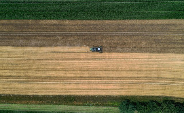 An aerial view shows a farmer driving his combine harvester in a barley field near Lünen, Germany, on July 14, 2020. (Photo by Ina Fassbender/AFP Photo)