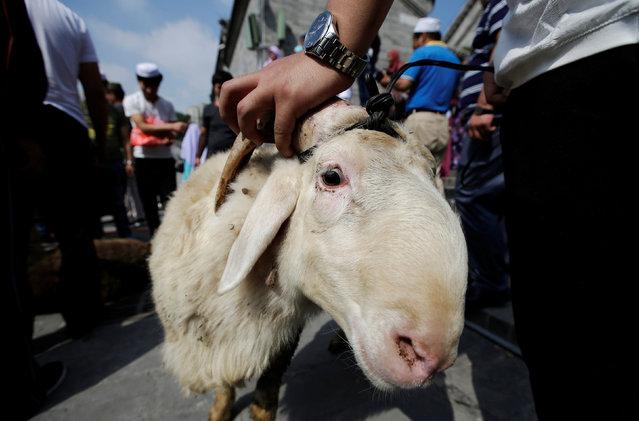 A man holds a goat to be sacrificed during Eid al-Adha festival at Niujie mosque in Beijing, China September 12, 2016. (Photo by Jason Lee/Reuters)