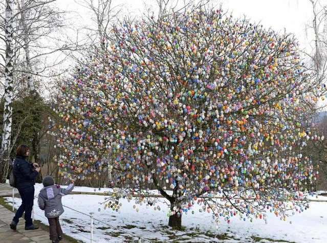 Visitors watch a tree decorated with about 10,000 Easter eggs in the garden of the retired couple Christa and Volker Kraft in Saalfeld, central Germany, Tuesday, March 19, 2013. The Kraft family has been decorating their tree at Easter for more than forty years. (Photo by Jens Meyer/AP Photo)