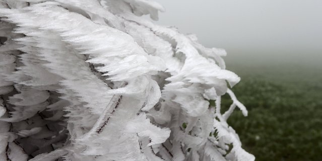 An ice covered tree is pictured near Amstall in northern Austria, December 2, 2014. (Photo by Heinz-Peter Bader/Reuters)