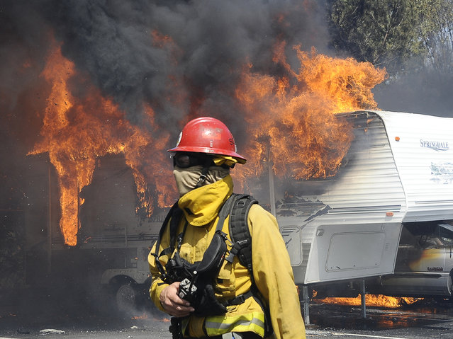 A firefighter works as a raging wildfire pushing towards the coast destroys trailers and motorhomes (background) in Camarillo May 2, 2013. The wind-driven brush fire raging along the California coast north of Los Angeles prompted the evacuation of hundreds of homes and a university campus on Thursday as flames engulfed several farm buildings and recreational vehicles near threatened neighborhoods. (Photo by Gene Blevins/Reuters)