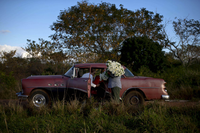In this Thursday, January 29, 2015 photo, private flower vendor Yaima Gonzalez Matos, 33, loads a bunch of daisies into the backseat of a rented 1957 Buick, with the help of driver Lazaro, in San Antonio de los Banos, Cuba. Gonzalez dreams of one day having a business big enough to let her buy a truck. For now she pays Lazaro about $20 a day including gas to transport the flowers to the capital. (Photo by Ramon Espinosa/AP Photo)