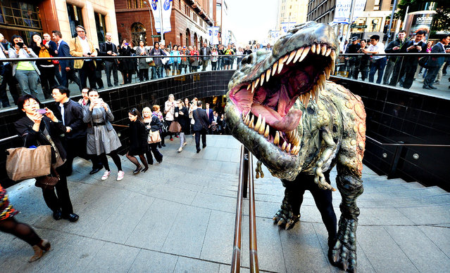"""In this handout provided by Destination New South Wales, a Tyrannosaurus rex takes a morning stroll with commuters in Martin Place on August 28, 2013 in Sydney, Australia. In a world first, the Australian Museum presents """"Tyrannosaurs: Meet the Family"""", an innovative, multimedia experience showcasing the newly-revised tyrannosaur family tree. With over 10 life-sized dinosaur specimens on display, including one of the oldest tyrannosaurs, Guanlong wucaii, the exhibition runs from 23 November 2013 to 27 July 2014. (Photo by James Morgan/Destination New South Wales via Getty Images)"""