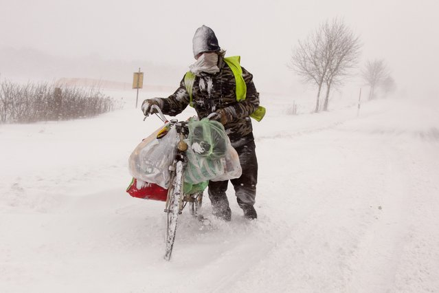 A man pushes his bicycle in a blizzard on a road near Zalaszentbalazs, 214 kms southwest of Budapest, Hungary, Sunday, February 8, 2015. Traffic on several minor roads in the western and southwestern parts of Hungary came to a halt due to the heavy snowstorms during Sunday. (Photo by Gyorgy Varga/AP Photo/MTI)