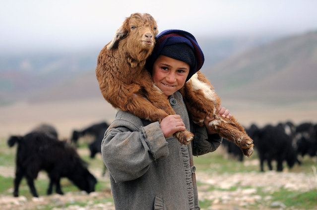 An Afghan boy carries a goat near his temporary shelter on the outskirts of Mazar-e-Sharif, Afghanistan, 16 February 2015. Due mainly to foreign aid Afghanistan's economy has shown signs of improvement though many Afghans still face job insecurity. (Photo by Sayed Mustafa/EPA)