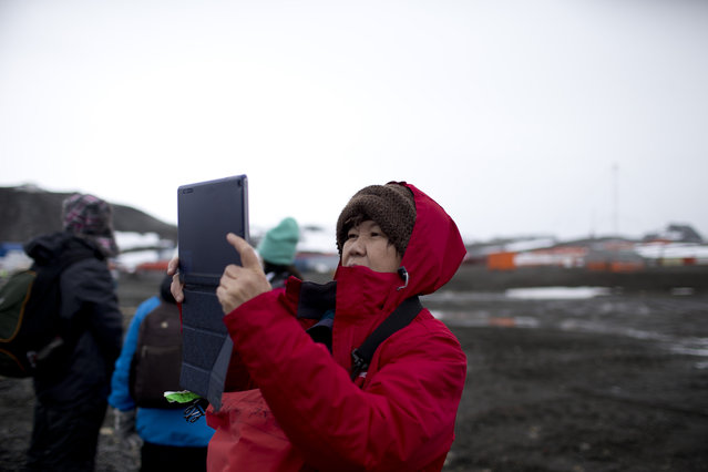 In this February 2, 2015 photo, a tourist uses a tablet to make a picture after disembarking from the Ocean Nova cruise ship, on King George Island, Antarctica. Most visitors arrive on the Antarctic Peninsula, accessible from southern Argentina and Chile by plane or ship. The next most popular destination is the Ross Sea on the opposite side of the continent, which visitors reach after sailing 10 days from New Zealand or Australia. (Photo by Natacha Pisarenko/AP Photo)