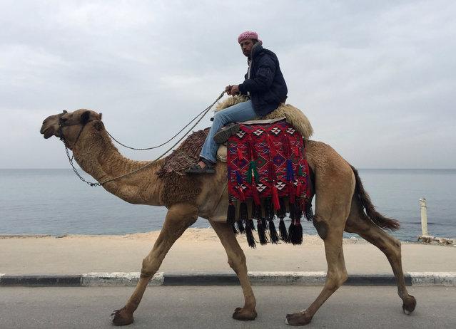 A Palestinian man rides a camel along the beach of Gaza City November 29, 2016. (Photo by Suhaib Salem/Reuters)