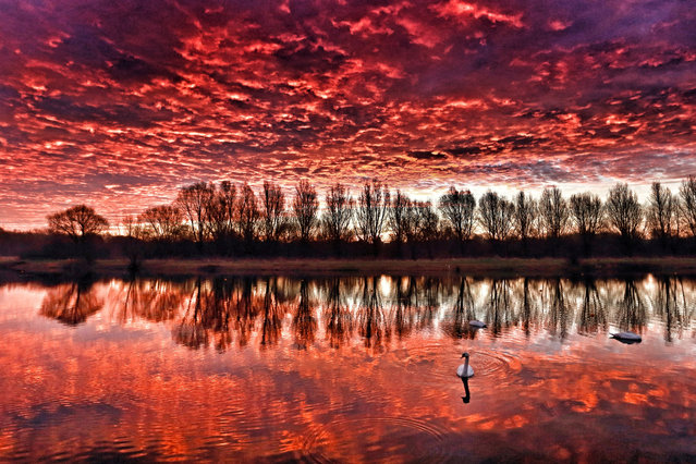 The sky looked on fire this morning, as it made the clouds glow red, just before sunrise at Peterborough Rowing Lake, in Nene Park, UK on January 18, 2017. (Photo by Paul Marriott/Rex Features/Shutterstock)