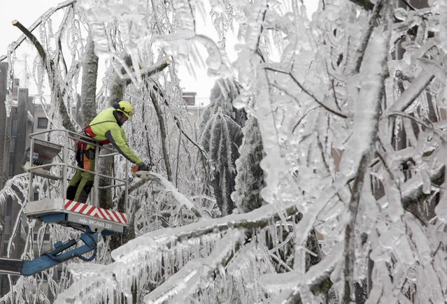 A worker cuts ice-covered branches with chainsaw in Postojna February 5, 2014. (Photo by Srdjan Zivulovic/Reuters)