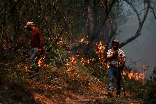 Environment ministry staff work to put out a forest fire near Constanza city, northwest of Santo Domingo, Dominican Republic, May 1, 2015. Several hectares of land were burnt due to the forest fire, with no reports of deaths or injuries, local authorities said. (Photo by Ricardo Rojas/Reuters)