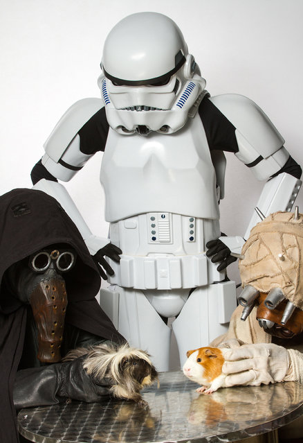 A humane society have drafted in Star Wars characters to help find adoptable animals new homes. The Ottawa Humane Society in Ontario, Canada, used the recognisable cosplay figures to adorably interact with the likes of dogs, cats and guinea pigs. Photographed by Rohit Saxena, the series featured a stormtrooper, a Tusken Raider and Garindan. (Photo by Rohit Saxena/Caters News)